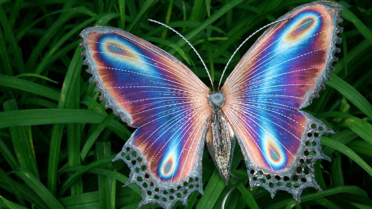 Risultato immagini per foto museo delle farfalle milano marittima