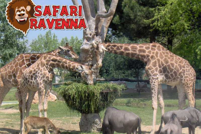 Zoo Safari Ravenna